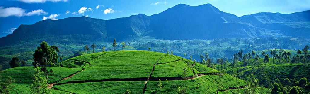 btw, questo è lo Sri Lanka, perfetto per chi ha almeno 3 mesi di tempo sabbatico