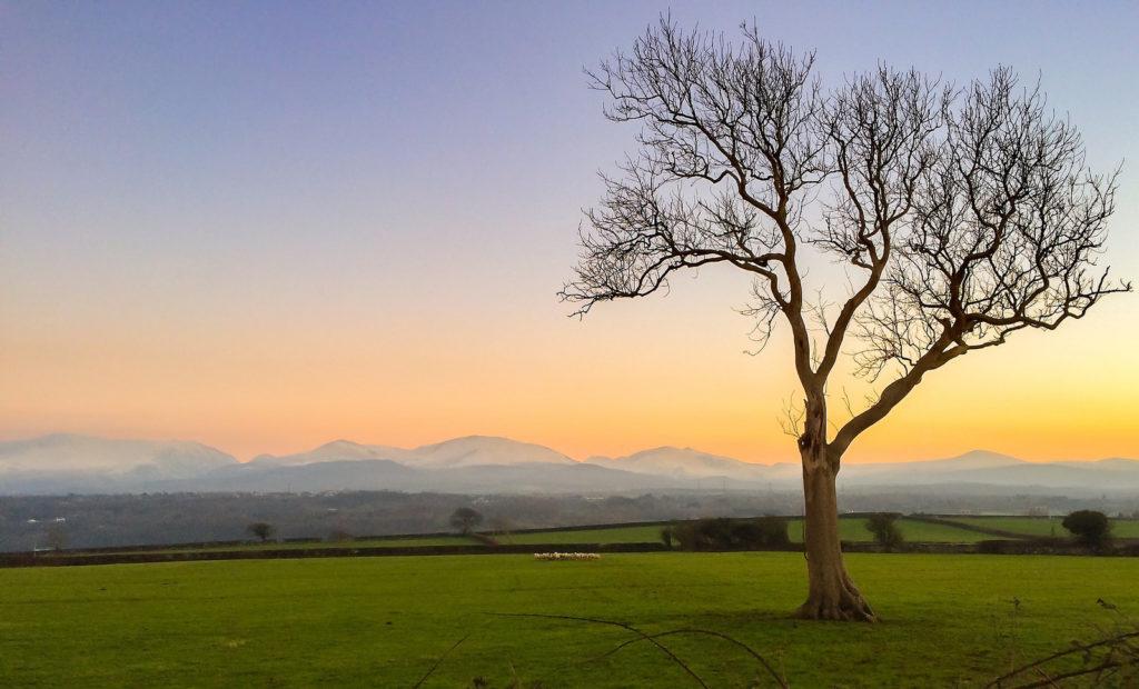 Gli alberi possono fare degli anni sabbatici?